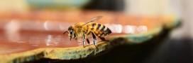 Le miel et ses vertus