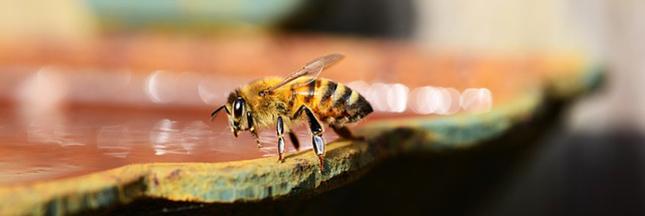 Redécouvrez les vertus du miel