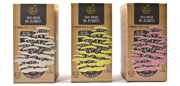 pret-a-pousser-champignons-legumes-boite-carton