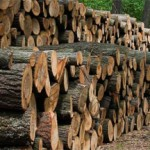 Guide du chauffage. Se chauffer au bois