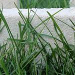 Habitat écolo high-tech : la maison en champignons