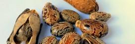 Huile de ricin : des oméga-6 à foison