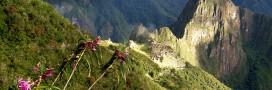 Forêt tropicale: pourquoi 2014 a été (plutôt) une bonne année