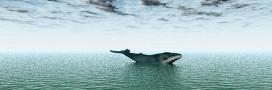 Magnifique et in extremis sauvetage d'une baleine à bosse