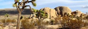 joshua-tree-national-park-californie-desert-mojave-00-ban