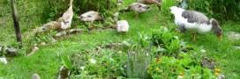 La permaculture au coeur de la biodiversité