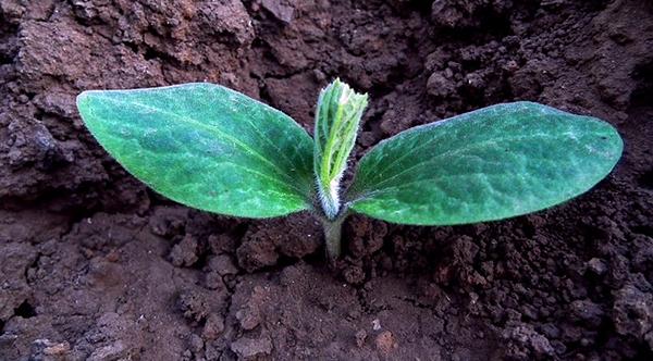 potager-legumes-jardin-bio-jardinage-conseils-parcelle-terrain-02