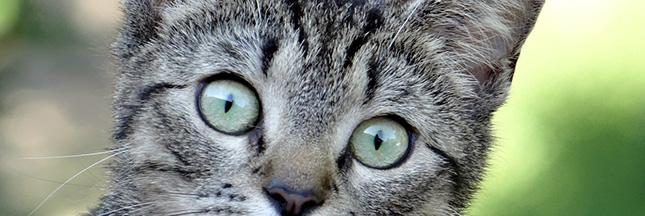 Le chat: plus mignon que sa litière...