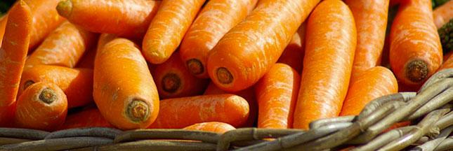Cuisinez les légumes de saison en janvier : le panier AMAP