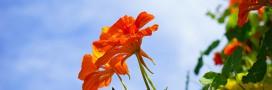 Le saviez-vous? on peut manger plus de 250 fleurs