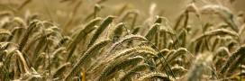 Lutte contre les pesticides: une 2ème chance pour Écophyto