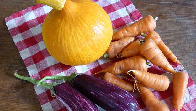 citrouilles-carottes-aubergines-legumes-bio-02