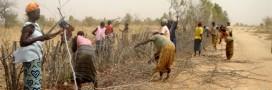 Arrêter le désert du Sahel grâce au bocage… normand!