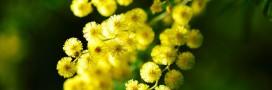 Recette: fêtez la Chandeleur avec des crêpes végétales aux fleurs