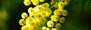 Recette : fêtez la Chandeleur avec des crêpes végétales aux fleurs