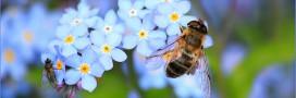 Abeilles: le géant des pesticides Bayer porte plainte contre l'Europe