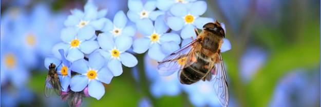 Abeilles : le géant des pesticides Bayer porte plainte contre l'Europe