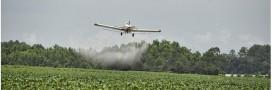 5 pesticides cancérigènes dénoncés par l'OMS