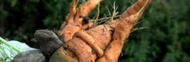Légumes en conserve ou surgelés: comment bien choisir?