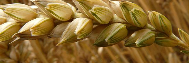 Santé : les aliments riches en magnésium