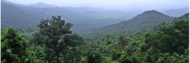 Global Forest Watch: un projet de suivi mondial sur la couverture forestière