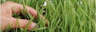 'Jardiniers, levez-vous !' la nouvelle websérie pour tous les jardiniers