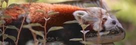 Le zoo de Lille rouvre ses portes: photos