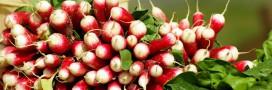 Recette du gaspacho aux fanes de radis