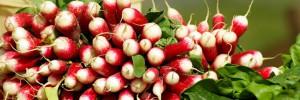 radis-legumes