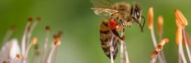 Halte au massacre des abeilles: contre les pesticides néonicotinoïdes