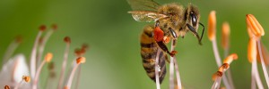 abeille-contre-les-pesticides-00-ban