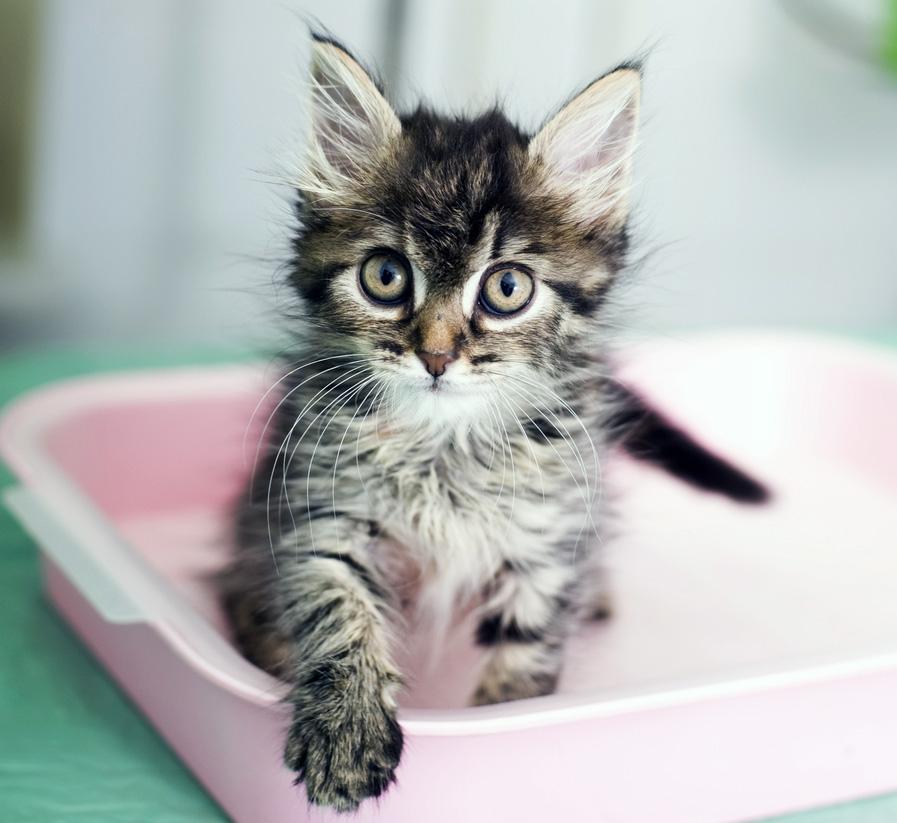 Ce chaton vous ferait aimer n'importe quelle litière...