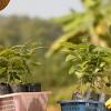 TREEZ : un engagement profond pour la reforestation