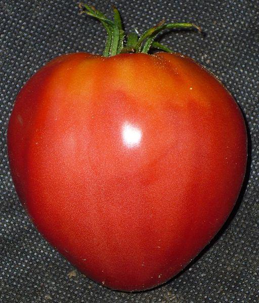 La véritable tomate coeur de boeuf : la base est plus fine que le sommet