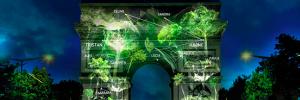 naziha-mestahoui-one-heart-one-tree-reboiser-ban