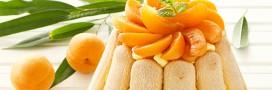 Dessert d'été: charlotte aux abricots et ricotta[recette bio]