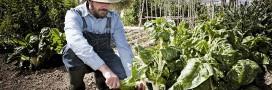 Quels légumes cultiver avec un pH du sol acide ou basique?