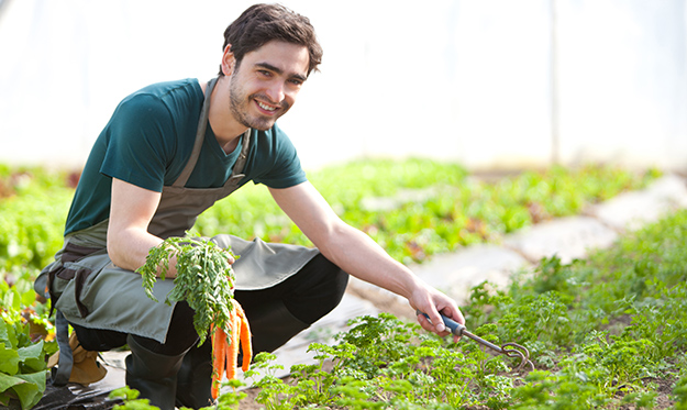 ph du sol Jeune fermier s'occupant de sa plantation de carottes © Shutterstock http://www.shutterstock.com/fr/pic-193550171/stock-photo-view-of-a-young-attractive-farmer-harvesting-carrots.html