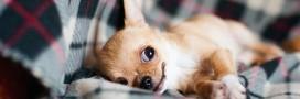 'Bio', 'healthy', 'premium': rien n'est trop beau pour nos chiens et chats?