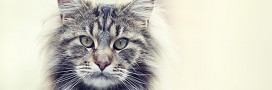 Comment soigner l'arthrose du chat naturellement ?
