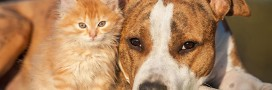 Les droits des animaux égaux à ceux des hommes: vers la 'personne non humaine'