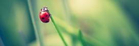 Lutte biologique: 18 animaux pour lutter contre les ravageurs au jardin