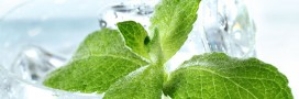 Fabriquez votre sirop de menthe : fraîcheur garantie