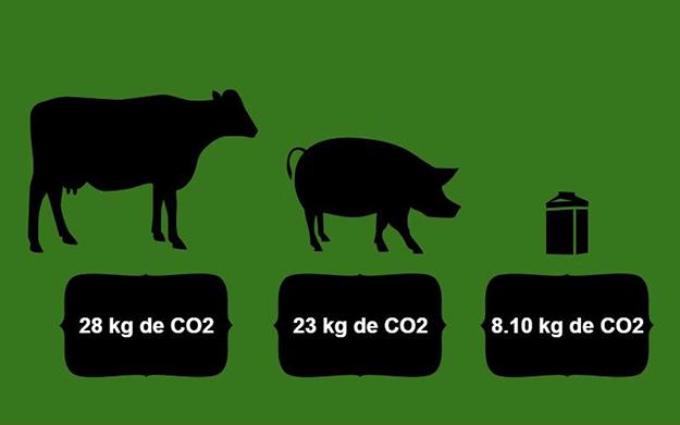 CO2-viande-boeuf-porc-lait