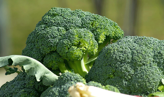 brocoli-fruit-legume-jus-frais