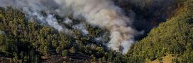 Peut-on vivre une année sans feux de forêt en Europe?