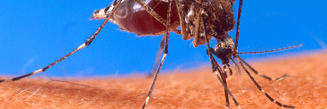 Faire soi-même une huile anti-moustiques