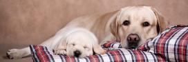 10 drôles de couples d'animaux mignons: mère et chiots!