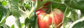 Tour du monde en 15 variétés de tomates étonnantes