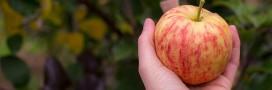 Toujours trop de pesticides dans les pommes selon Greenpeace